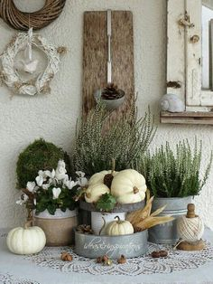 White pumpkins, galvanized containers and plants. Lovely for early Autumn. White pumpkins, galvanized containers and plants. Lovely for early Autumn. White Pumpkins, Painted Pumpkins, Fall Home Decor, Autumn Home, Early Autumn, Diy Autumn, Autumn Garden, Pumpkin Flower, Autumn Display
