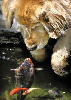 17.mai.2016 - Quando Jessika encontrou a raposa Juniper e a levou para casa, nos…