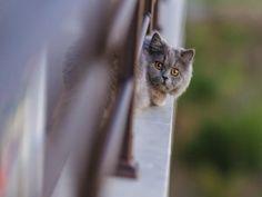 Gato asomado en una terraza