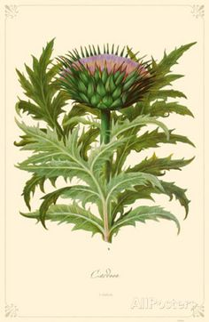 Cardon Flower Masterprint