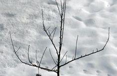 Die 554 Besten Bilder Von Obstbaum Schneiden In 2019 Garten