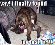 Funny Dog Balls