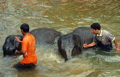Kuala Gandah Elephant Sanctuary. #MalaysiaAus #AirAsia