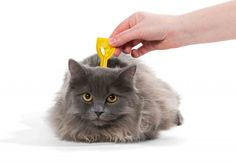 Indoor Cats and Intestinal Parasites | The Maywood Veterinary Clinic Blog