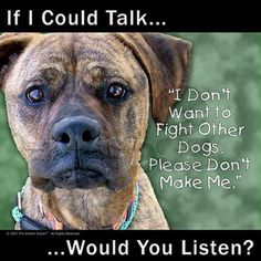 """If I could Talk ....    """" I  don't want to fight other dogs, Please don't make me.""""  ... Would you listen?"""