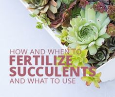 Succulent Care - Tips for Growing Succulents! | Succulents and ...