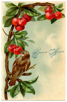 Beautiful Vintage Bird with Cherries - The Graphics Fairy