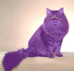 don't really know how i feel about this......Pix For > Purple Cat