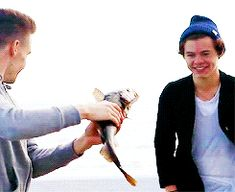 Can we please appreciate Harry's face when Liam chases after his with the fish?