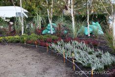 Ogród z lustrem - strona 50 - Forum ogrodnicze - Ogrodowisko