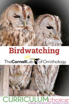 Birds are fascinating creatures, and birdwatching is a particularly satisfying branch of nature study. Cornell Lab of Ornithology provides everything you need to spark in your family a lifelong interest in birds. #birdwatching #naturestudy