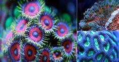 Explosión+de+color+en+la+maravillosa+vida+submarina