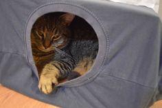 """Naprosto úžasný nápad na kočičí domeček z blogu """"my Life!"""", za použití krabice a starého trička."""
