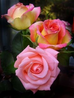 Flowers are God 's Way of Smiling Beautiful Rose Flowers, Pretty Roses, Love Rose, Amazing Flowers, Beautiful Gardens, Beautiful Flowers, Lavender Roses, Pink Roses, Pink Flowers