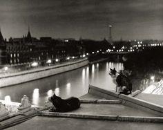 Paris, Cats at Night Prints by Robert Doisneau at AllPosters.com