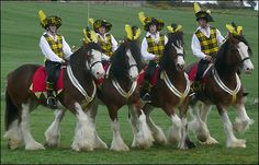 Oh gosh Clydesdale horses with Scottish riders. zenyatta-and-other-beautiful-horses Big Horses, All About Horses, Horse Love, Work Horses, All The Pretty Horses, Beautiful Horses, Animals Beautiful, Clan Macleod, Clydesdale Horses