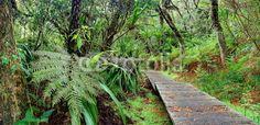 Papier peint Randonnée en forêt tropicale.