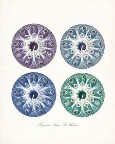 4 Sea Urchins Coastal Decor Fantasy Art Print by vintagebytheshore,