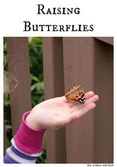Raising Butterflies:  How to get started and tips on how to reinforce learning! FUN AT HOME WITH KIDS