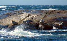 Sweden's first marine national park - Kosterhavet National Park