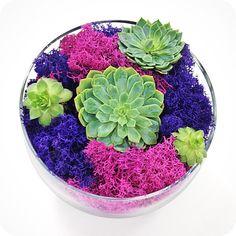 SUCCULENT MOSS terrarium-trendy home decor, moss terrarium, succulents, housewarming, office, indoor planter ,terrarium, cool gift ideas