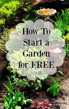 How to Start a Garden for Free this Spring! | Gardening