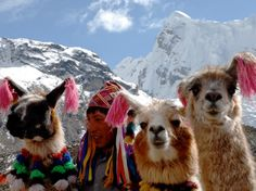 You're more likely to come across a group of llamas or alpaca on Peru's Ausangate Trail than you are humans