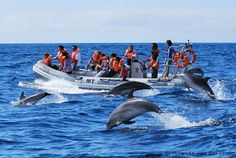 Whale watching and swimming with dolphins in the Azores, Futurismo, Azores, Portugal