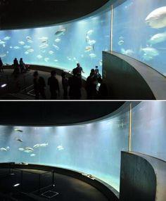 昨年3月11日(上)と今月14日(下)の葛西臨海水族園のマグロなどの展示水槽。クロマグロやハガツオなどが相次いで死に、水槽内の魚が少なくなった(東京動物園協会提供)
