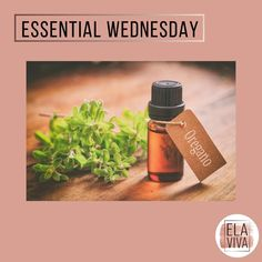 """Present Holistic Life Coach on Instagram: """"Essential Tuesday everyone!  Yes! Essential;-) Every Wednesday here at ElaViva the best tips about Aromatherapy and Aromathology.  Today we…"""" Wednesday, Tuesday, Aromatherapy, Essential Oils, Essentials, Good Things, Tips, Instagram, Essential Oil Uses"""