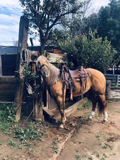 My roping buddy! Horses And Dogs, Cute Horses, Horse Love, All The Pretty Horses, Beautiful Horses, Animals Beautiful, Barrel Racing Horses, Barrel Horse, Foto Cowgirl