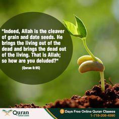 #Quran #Life #Birth #Science
