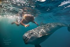 Sunbeams - Red sea, underwater photography. 2010-2016 © Will Falcon (Vitaliy Sokol)  Big image I sell here: http://www.shutterstock.com/pic-499220401/stock-photo-a-little-girl-diving-with-dolphin-underwater-in-deep-blue-sea.html  Thx for your opinion