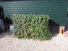 Foto's van onze afgeronde projecten - A.C. van der Grift tuinen