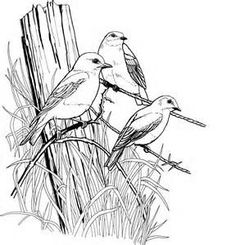 Bird Coloring Pages for Adults Page of a bird in Spring