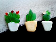 Original Design Magnets Succulents Genuine Sea Glass Sea