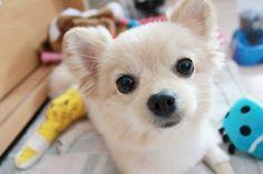 bucko9:  Dog || via tumblr on We Heart Ithttp://weheartit.com/entry/83115109/via/snapinq