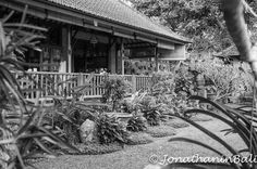 Murni's Houses Ubud Bali Indonesia  For the book Secrets of Bali Fresh Light on the Morning of the World - go to http://ift.tt/2oNwySP  For the book Murnis Bali Tours Where to go What to do and How to do it - go to http://ift.tt/2oRi9EL  #aroundtheworld #worldtraveler #jonathaninbali #www.murnis.com #travelphotography #traveler #lonelyplanet #travel #travelingram #travels #travelling #traveling #instatravel #asian #travelphoto#exploringtheglobe #theglobewanderer #mytinyatlas #planetdiscovery…