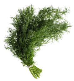 Dill - one of my favorite ingredients. Love the smell of fresh dill! Natural Headache Remedies, Herbal Remedies, Health Remedies, Healing Herbs, Medicinal Herbs, Natural Healing, Good Sources Of Calcium, Plantar, Growing Herbs