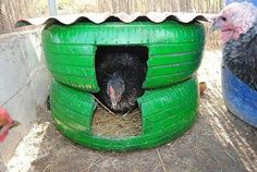 Old tires for chicken houses. I could see this used as a dog / cat house, as well.