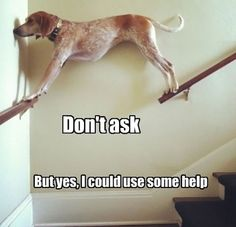 Don`t Ask…
