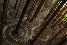 Sylvain Meyer, land art using materials from the forest floor