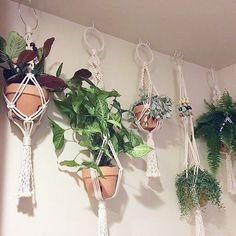 I love seeing where my plant hangings end up! How gorgeous is this indoor garden full of Amy Zwikel Studio plant hangers?? There are still some left for you too!