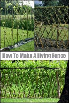 Add Privacy to Your Yard by Making a Beautiful Living Willow Fence
