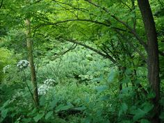 Nature Nature, Plants, Naturaleza, Plant, Nature Illustration, Off Grid, Planets, Natural