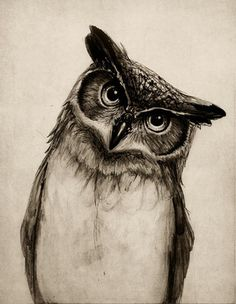 Owl Sketch Art Print - Polyvore  I love that it has a curious expression - most owl drawing look angry/mean