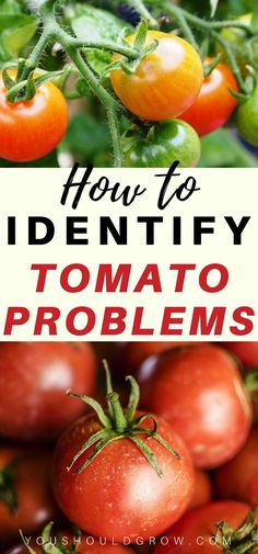 Organic vegetable gardening tips and ideas. Growing tomatoes - How to identify tomato problems. Tips For Growing Tomatoes, Growing Tomato Plants, Tomato Seedlings, Growing Tomatoes In Containers, Growing Vegetables, Grow Tomatoes, Baby Tomatoes, Cherry Tomatoes, Dried Tomatoes