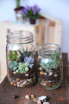 and small terrarium in the ball Mason Glass! Something different, right Large and small terrarium in the ball Mason Glass! Something different, right? -Large and small terrarium in the ball Mason Glass! Something different, right? Mason Jar Plants, Mason Jar Succulents, Mason Jar Terrarium, Plants In Jars, Succulent Centerpieces, Hanging Succulents, Succulents In Containers, Hanging Plants, Succulents Garden