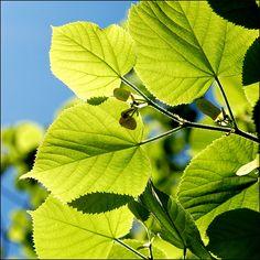 La phytothérapie « désigne la médecine basée sur les extraits de plantes et les principes actifs naturels« . Il s'agit d'une méthode de soins à l'origine ...