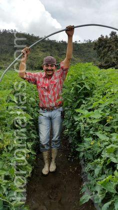 Trellis, Nature, Grow Tomatoes, Mesh, Plants, Naturaleza, Nature Illustration, Off Grid